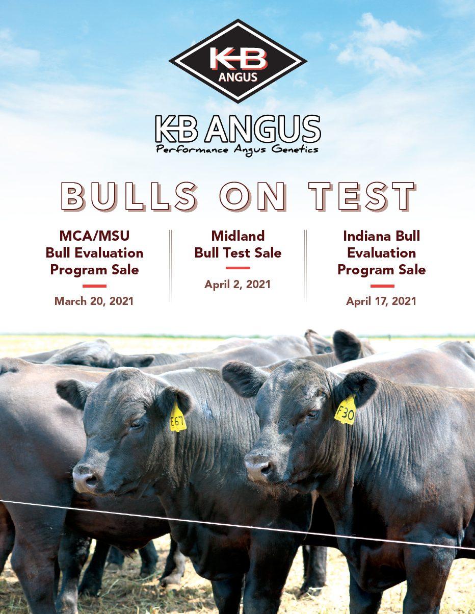 KB Angus Bulls On Test Catalog